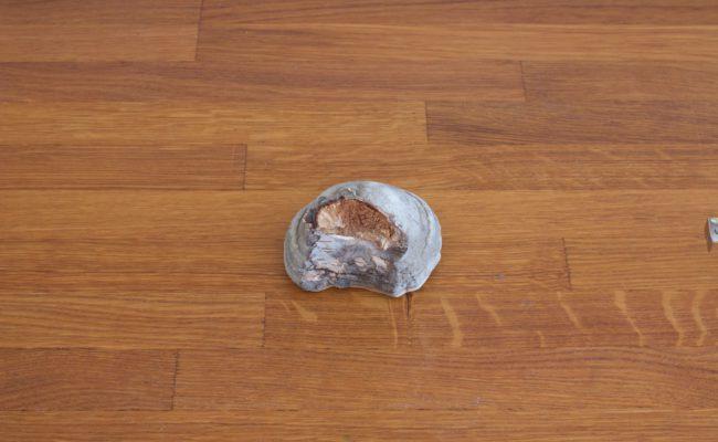 naturalnyy-berezovyy-grib-trutovik-razmer-4-foto-5